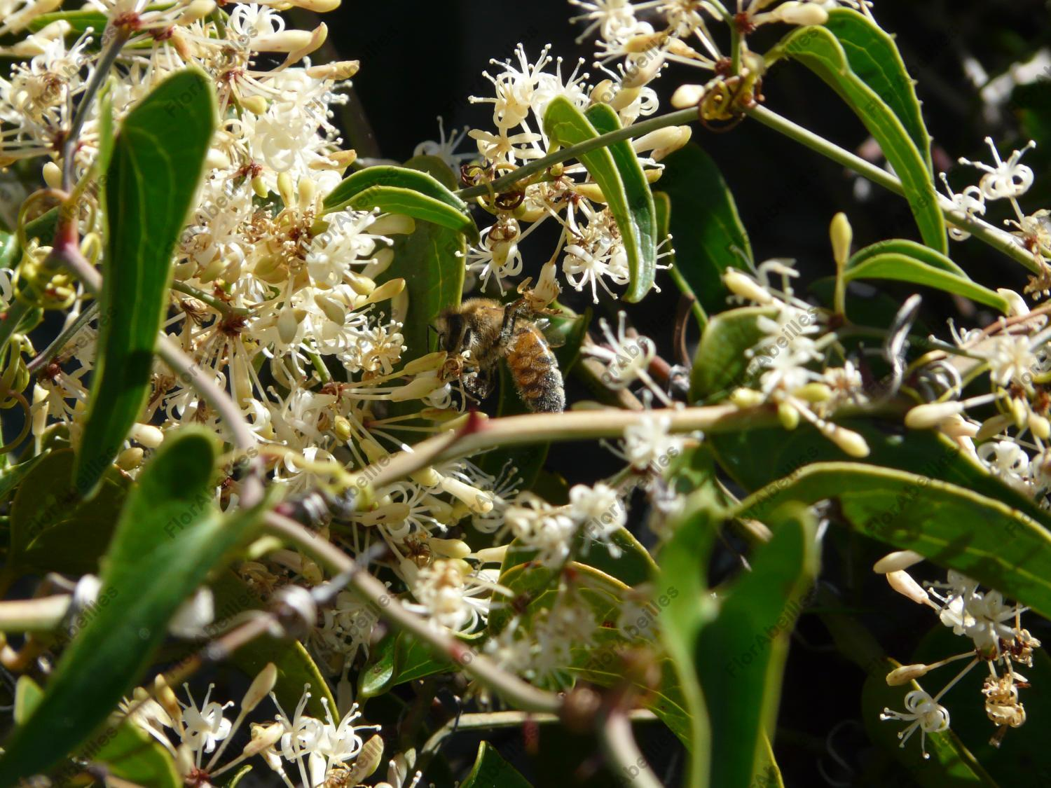 smilax dating site The history behind the crown's most incredible looks  smilax, lilac, and white  use of and/or registration on any portion of this site constitutes acceptance.